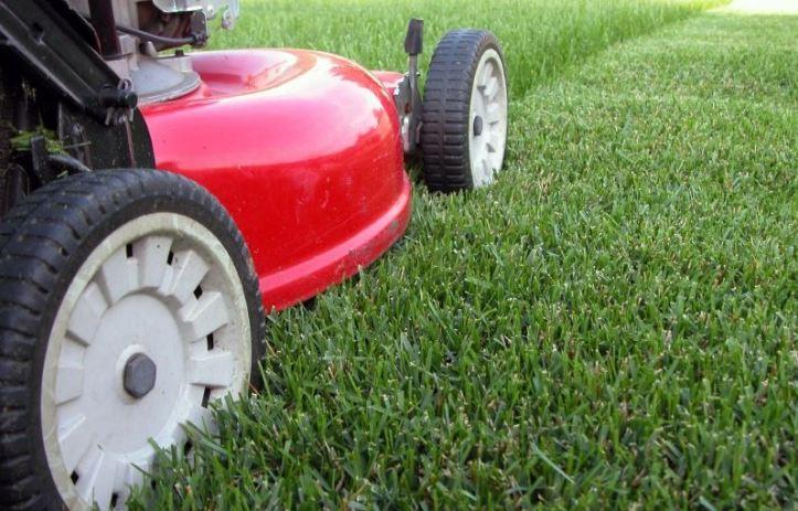 grass may 2015
