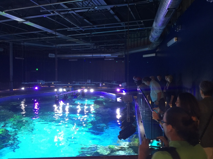 The group received a VIP tour of SEALIFE at GLC Outlets