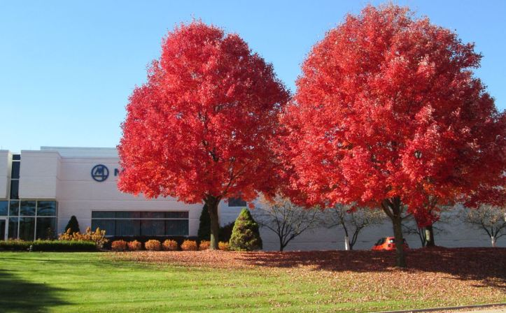 A row of bright red trees next to Marposs office building