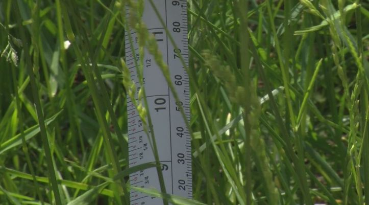 Grass over eight inches tall is in violation of the City's ordinance
