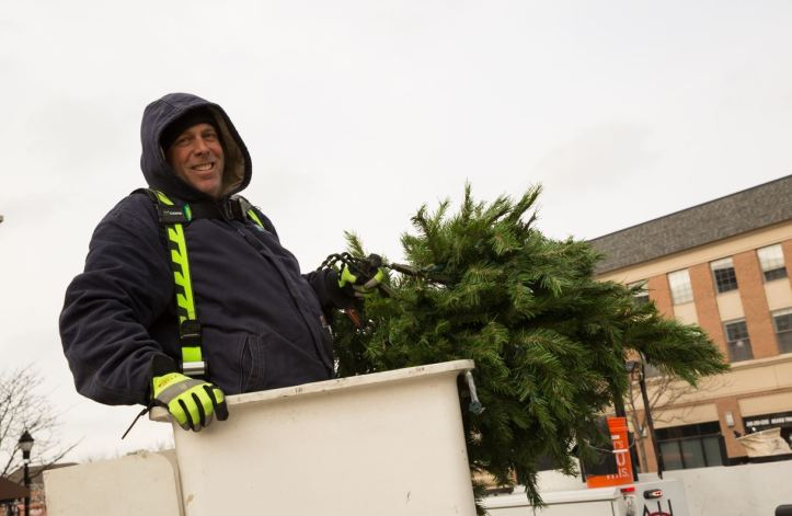 DPW staff holding tree branches
